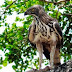 Wild Asia: The animal world