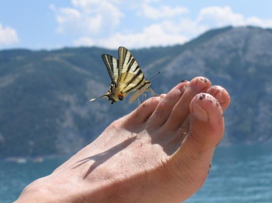 [papillon-insolite-lac-hautes-chorges-663340.jpg]