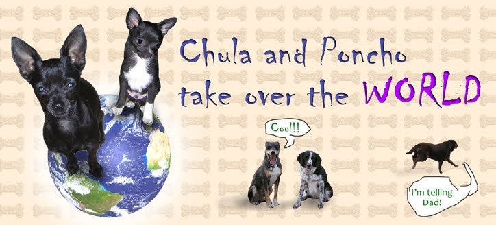 Chula and Poncho Take Over the World