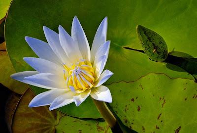 """Эта духовная практика называется  """"Цветок лотоса """".  Смысл ее заключается в следующем.  Человек представляет, как будто..."""