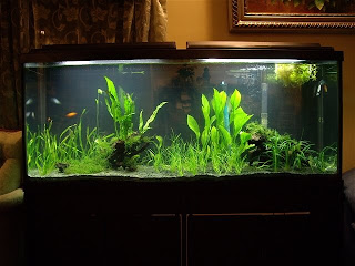 how to set up a fish tank properly