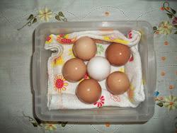 Ovos frescos lá do ninho pra fazer nosso bolinho