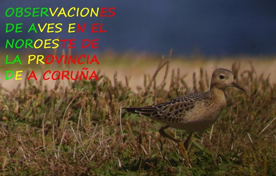 Observaciones de aves en el noroeste de la provincia de A Coruña