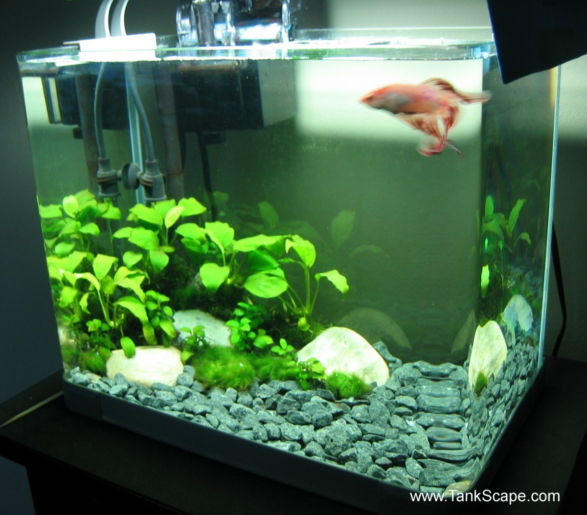 betta fish tank design - Betta fish tank, betta tank, betta fish ...