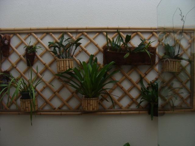 trelica bambu jardim : trelica bambu jardim:Bambu & Cia