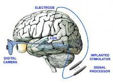 otak kepala manusia