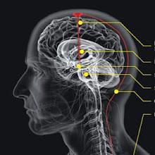 otak manusia sinar x