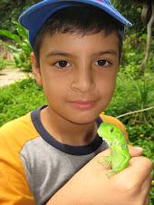 Iguanita