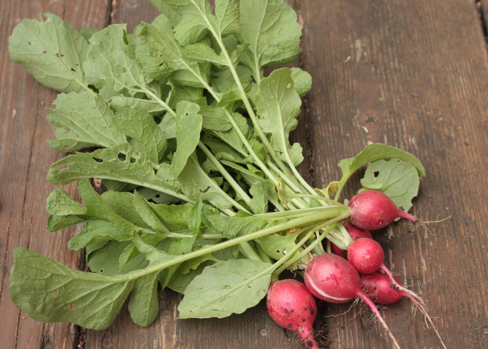Cuisiner les fanes de radis et de betteraves jenny of - Cuisiner les betteraves ...