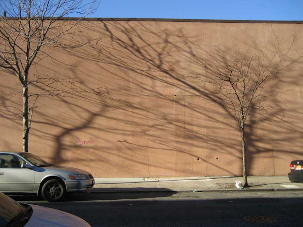 Tree Shadows - Behind a Greenpoint supermarket. The shadows are thrown by the tree to the left of the one they're behind.