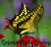 Metamorphosis Monday~hosted by Susan