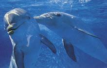 就像海豚那么幸福