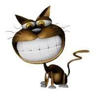 Kucing3