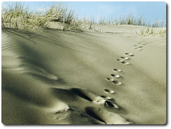 steps sand