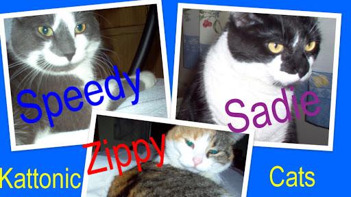 Kattonic Cats