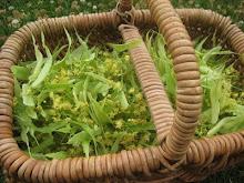 Tilia Harvest