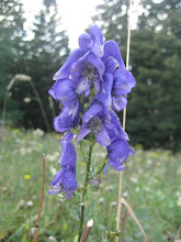 Monkshood Mountain