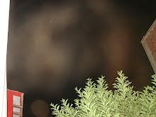 Ultimos Avistamientos Ovni Alien felino 31/ene/2010 hrs 04:20:22am DSC05591jpg sec x Rodolfo Truji