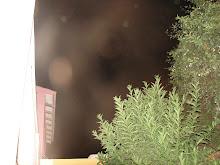 ALIENS secuencia Huacho dic/2009