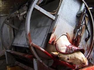 Abattage des animaux : Bardot porte plainte contre deux ministres