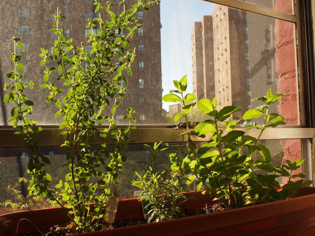 15 Cool Indoor Window Boxes Billion Estates 59862