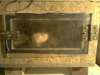 ¿Cómo hacer una incubadora casera?