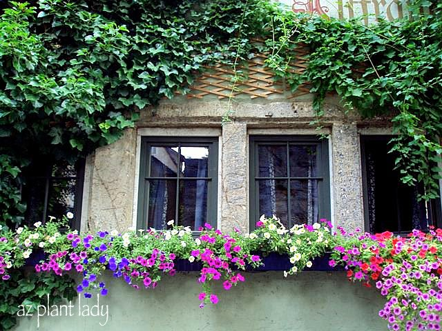 German Window Boxes Window Boxes....don't You