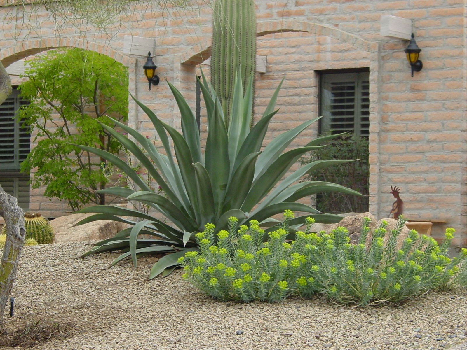20 modern desert landscaping plants photos landscape ideas for Landscaping plants