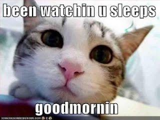 lol cat morning