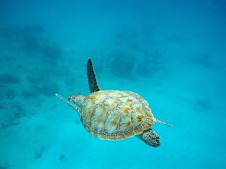 Imagenes de buceo en Barbados
