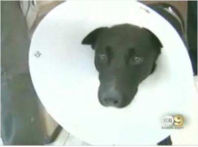 [dog+saved+human.jpg]
