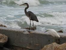 Coquina Beach, FL