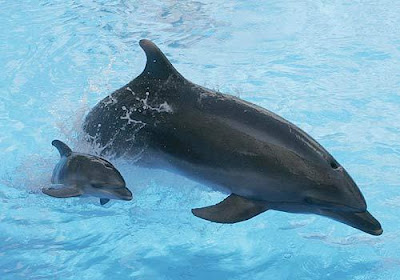 Babypicture on Cute Baby Dolphin Images   Baby Animal Pictures