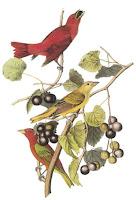 birds Dover