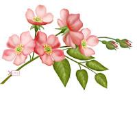 Pink Flower ecg