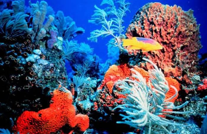 [coralreef.jpg]
