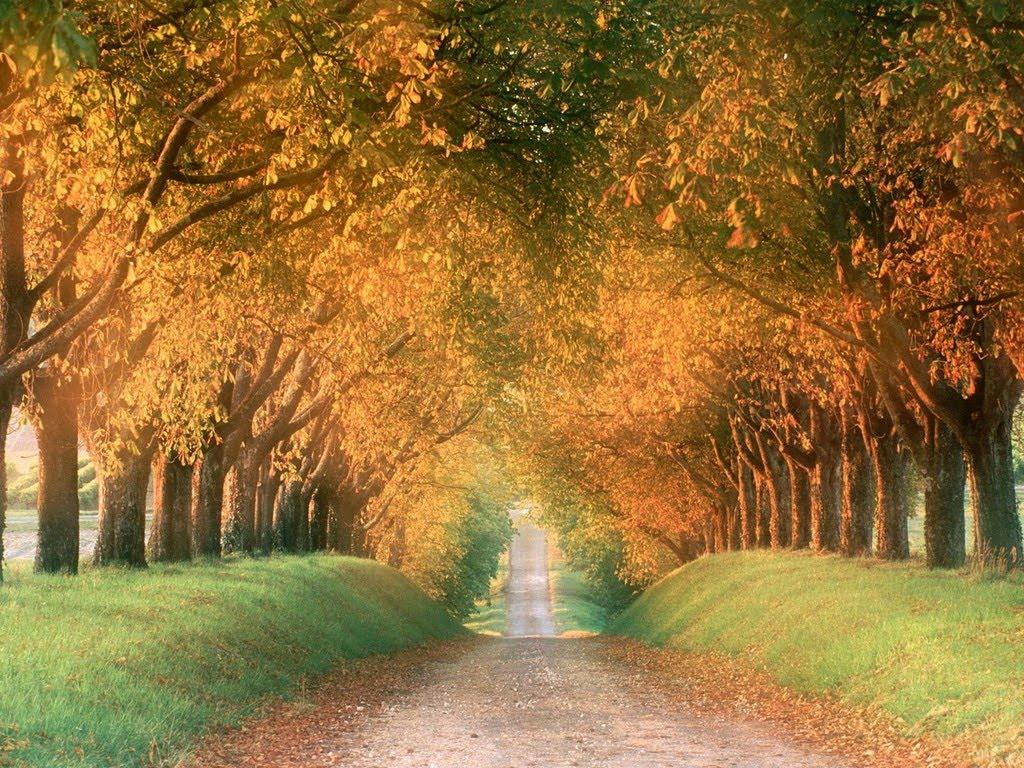 http://3.bp.blogspot.com/_JoAQoZuynkY/TI4eRIJKkYI/AAAAAAAAAVw/0wp9eAb253g/s1600/Autumn_Road,_Cognac_Region,_France.jpg
