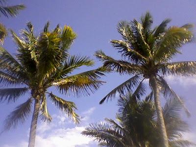 june calendar clip art. coconut trees clipart.