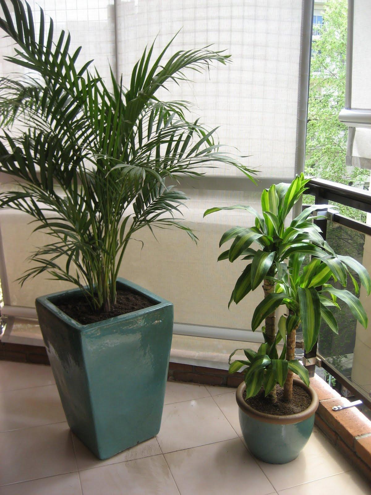 Planificaci n de espacios verdes arreglos florales plantas de interior - Macetas para plantas de interior ...