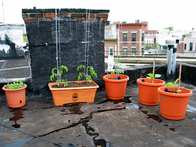 Rooftop Container Vegetable Garden