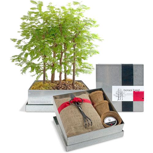 Bb blog bonsai forest kit for Eco friendly home kits