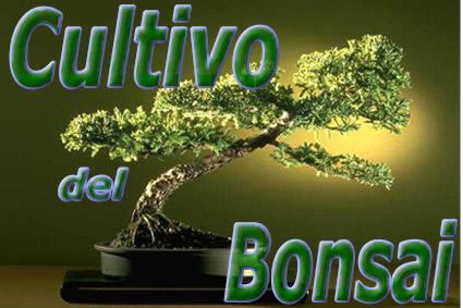 Galeria bonsai cultivo del bonsai - Cultivo del bonsai ...