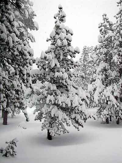 [Snowfall_NTrees_2003.jpg]