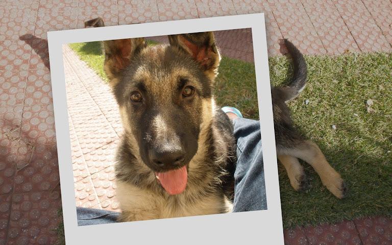 Óscar - 3 meses - 15 kg