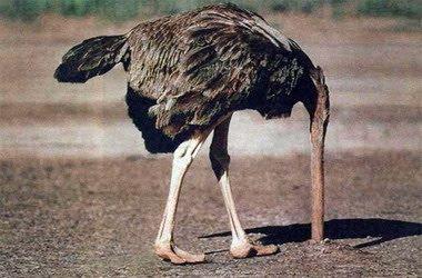 Resultado de imagen de avestruz metiendo la cabeza tierra