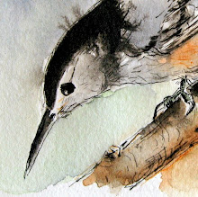 The Nuthatch ... watercolor and story