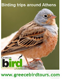 Greece Bird Tours