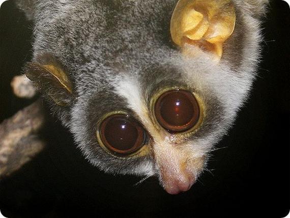 rarest animals in the - photo #22