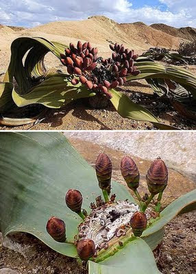 Las 10 Plantas Mas Raras Del Mundo