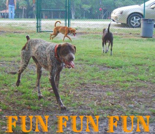 [dogpark+fun]
